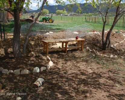 elm trees and seating area