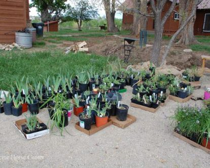 donated plants